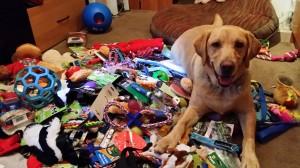 Jaxson helping sort the donations