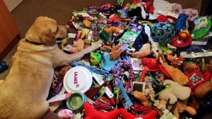 donations for Los Cabos Humane Society 2